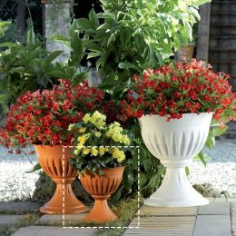 31901  Alba Flower Cup-25